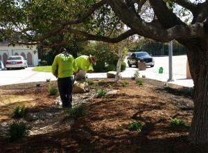 Alma Gardening - Work in Progress